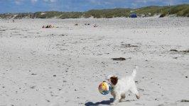 Urlaub am Meer auch für den Hund die Hunde genießen die Zeit am Meer