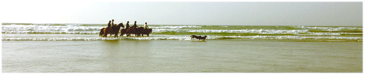 Ebbe am Meer
