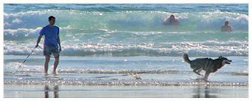 Hund am Atlantik Strand der Bretagne